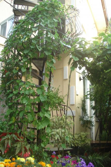 1-комнатная квартира посуточно (вариант № 867), ул. Кастрополь, ул. Кипарисная улица, фото № 15