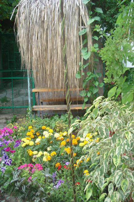 1-комнатная квартира посуточно (вариант № 867), ул. Кастрополь, ул. Кипарисная улица, фото № 16