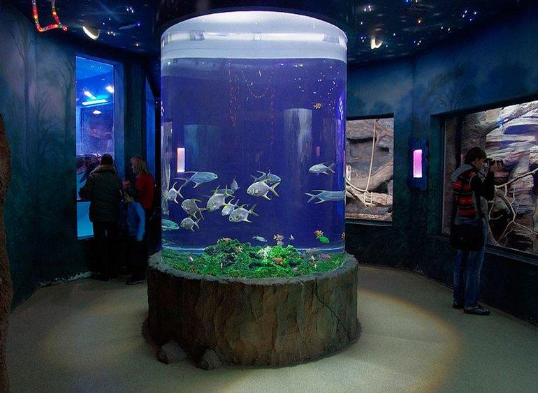 аквариум музей в Севастополе