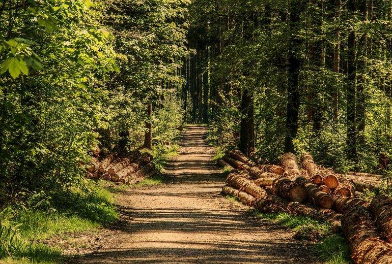 Щепкинский лес в Ростове-на-Дону