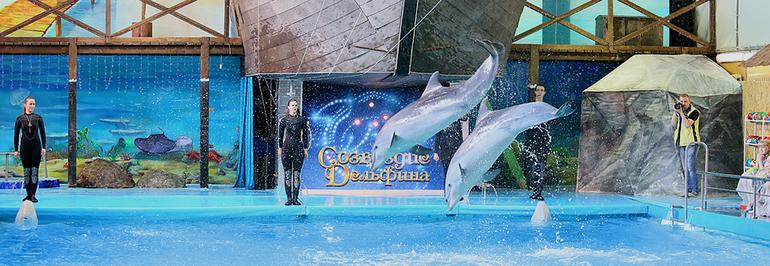 шоу дельфинов в Ярославле