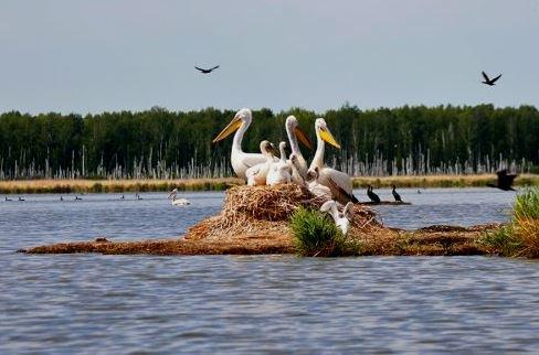 природный парк в Омске