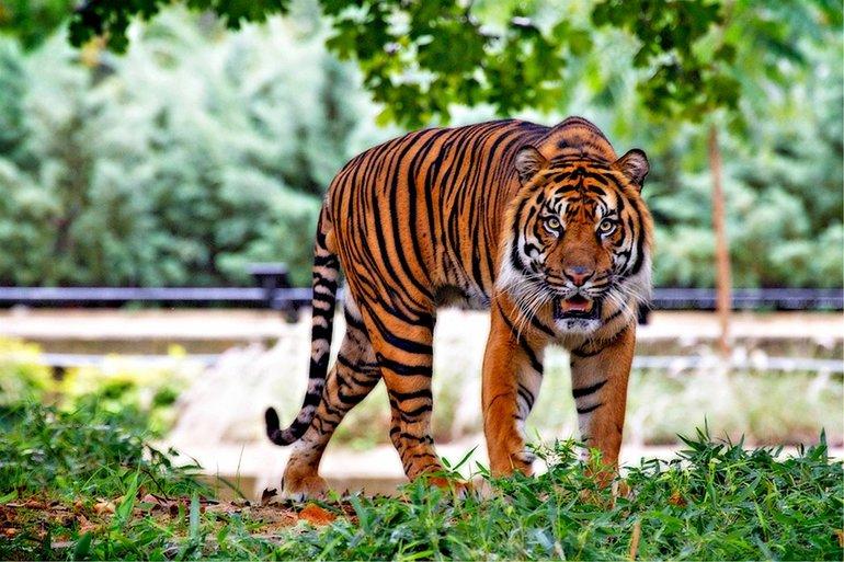 Зоопарк в Самаре