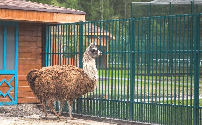 зоопарк в Старом Осколе фото